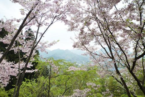 桜華園 4月
