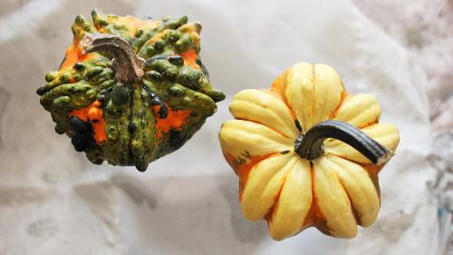 ハロウイーンかぼちゃ種類ギャラクシー2