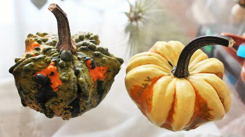 ハロウイーンかぼちゃ種類ギャラクシー